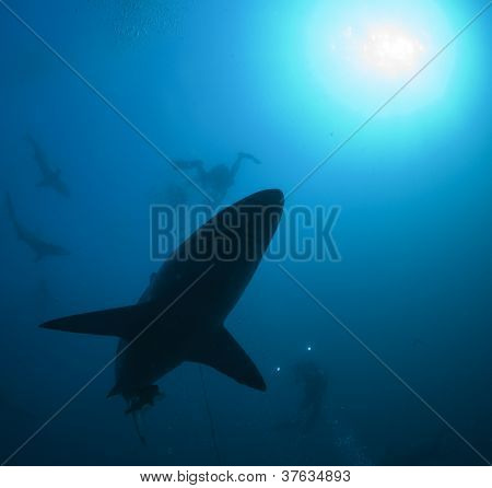 shark and diver underwater