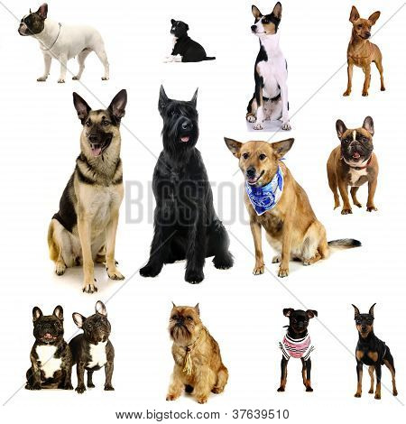 Different breeds of a dogs