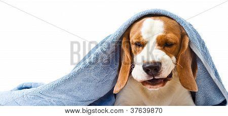 Very Much Sick Dog