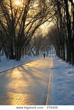 Winter Evening In Park