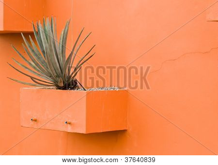 The Shrub In The Orange Concrete Pot