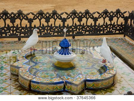Bathing doves, Seville, Andalucia, Spain