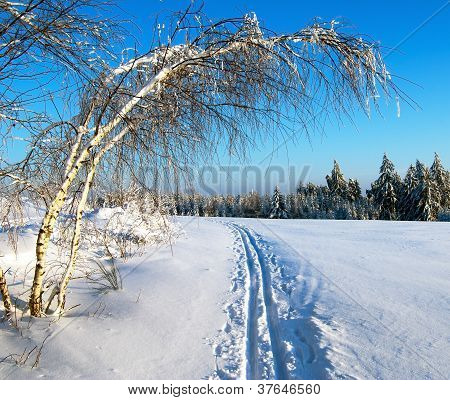wintry evening view cross country skiing way with ribbon tree