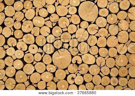 Texture Of Cut Timber Logs