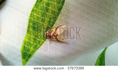 Different Insect - Moth