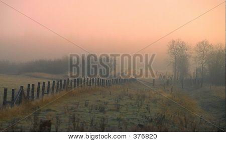 Chelmsford Fog