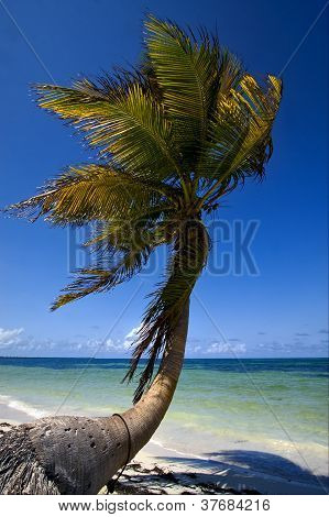 Palm In The Wind In The Blue Lagoon Mexico