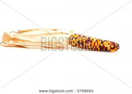 Colorful Corn Isolated On White