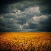 foto of cumulus-clouds  - Dark stormy clouds over wheat field - JPG