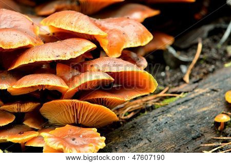 mushrooms on a tree stump in the forest