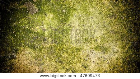 Mold on stone Grunge background with fungus spots.
