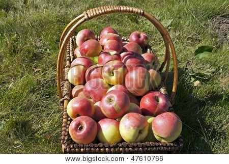 Apples In The Wicker Basket