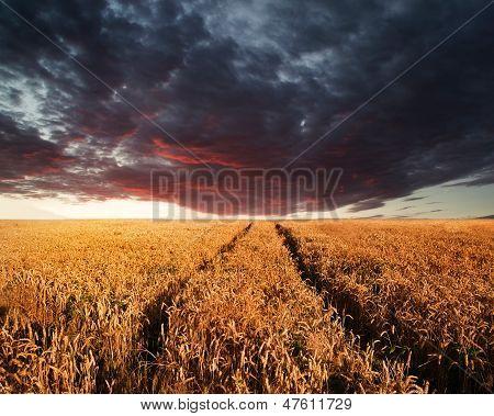 Stunning Wheatfield Landscape Summer Sunset Under Moody Stormy Dky
