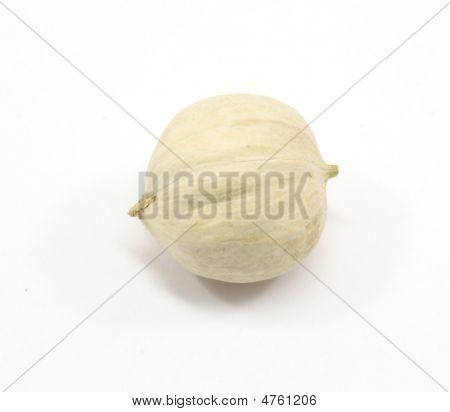 Lone Hickory Nut