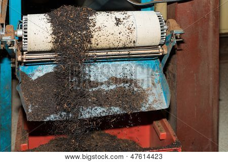Black Tea Bulk On Production Line At Tea Factory
