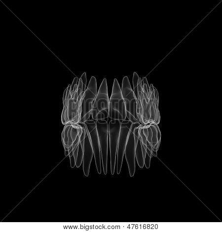 X-ray Of Human Teeth