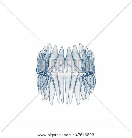 Raio-x dos dentes humanos
