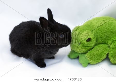 Bunny And Frog