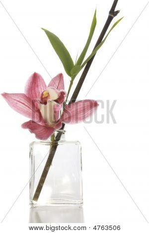 Orchid Arrangement