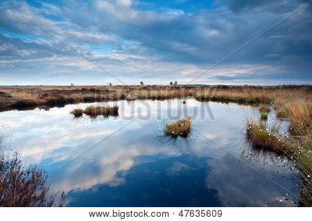 Cloudscape On Blue Sky Over Swamps