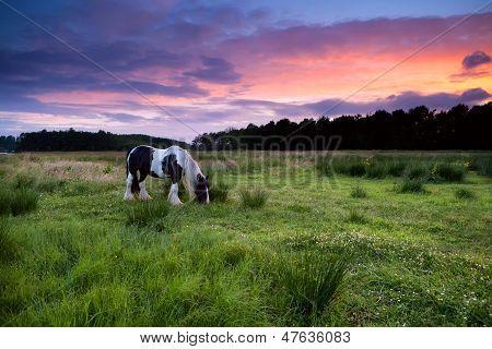 Apache Horse Grazing At Sunset