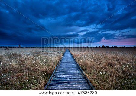 Wooden Path Through Swamp