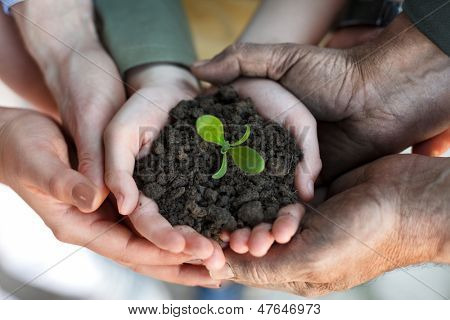 farmers family hands holding a fresh young plant, symbol of new life and environmental conservation