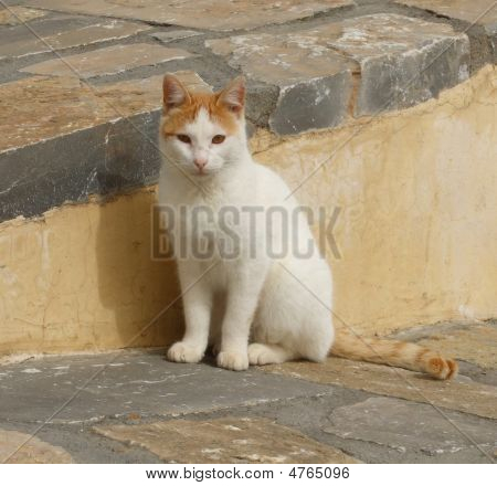 Stray Greek Cat