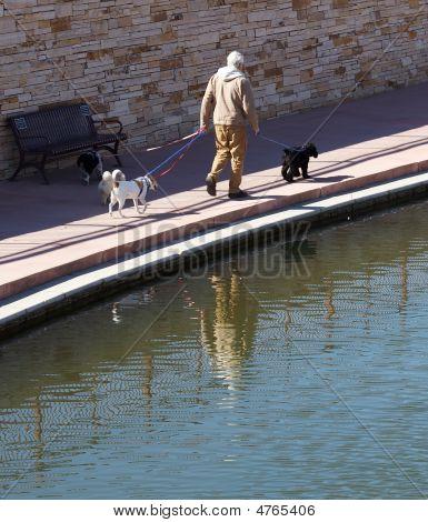 älterer Mann zu Fuß Hunde