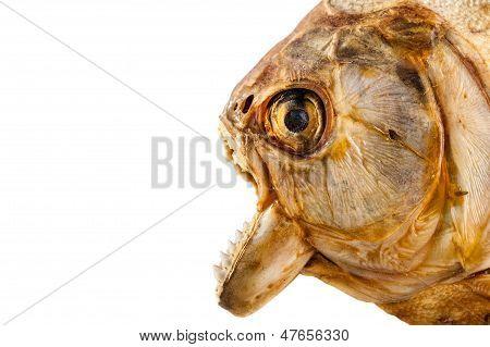 Piranha's Head