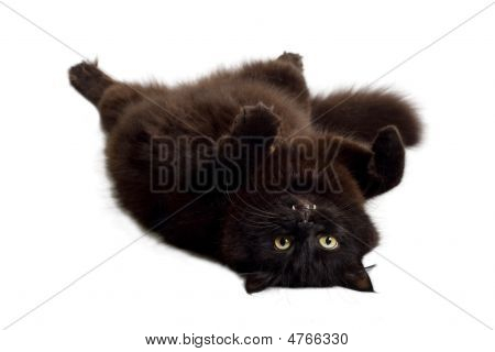 Black Cat Lying On It's Back