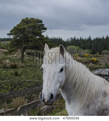 white horse in rural setting