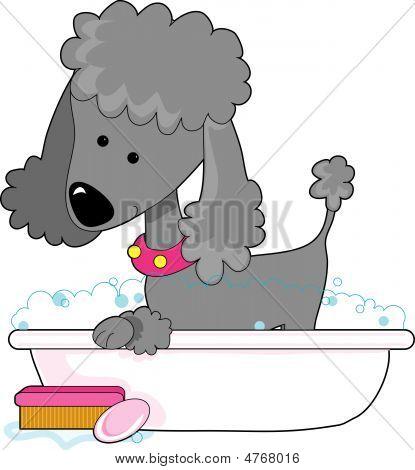 Poodle Bath Grey