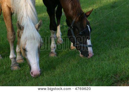 2 Horses