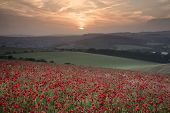 stock photo of suny  - Beautiful landscape image of Summer poppy field under stunning sunset sky - JPG