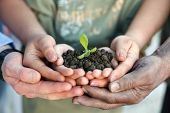 Conceptual closeup environment photo of hands holding a young plant