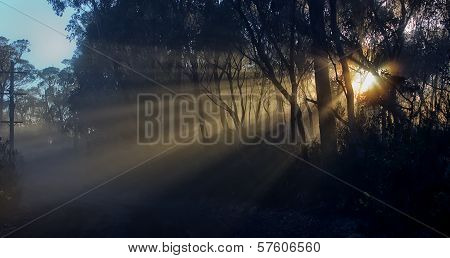 Sunrise through mist in the Blue Mountains