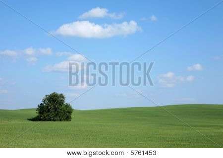 meadow tree