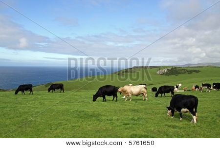 Rural farm land view of fields and cows and the English Channel