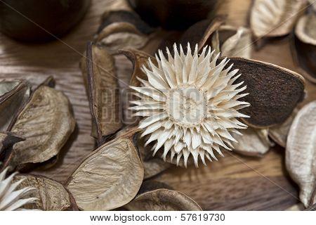 Natural Dry Flowers Decor. Potpourri Material Closeup