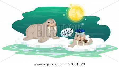 Walrus on Thin Ice