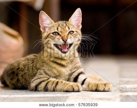 Cute Pet Kitten