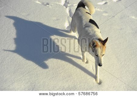 Dog And Shadow
