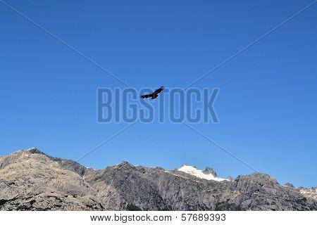 Condor gliding above the Andes mountains