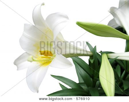 Easter Lily Silo