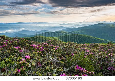 Roan Highlands Southern Appalachian Highland Meadow