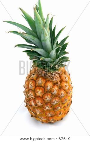 Whole Pinapple On White