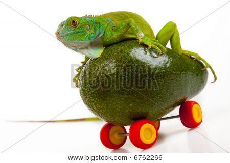 Grüner Leguan auf Obst mobile