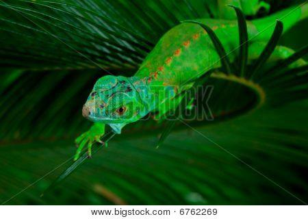 Grüner Leguan am Blatt