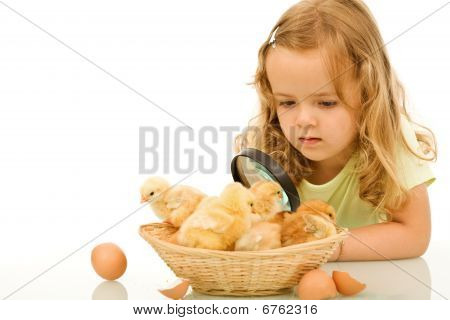 Little Girl Studying Her Easter Newborn Chickens
